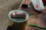 Präparieren einer Schweinepfote