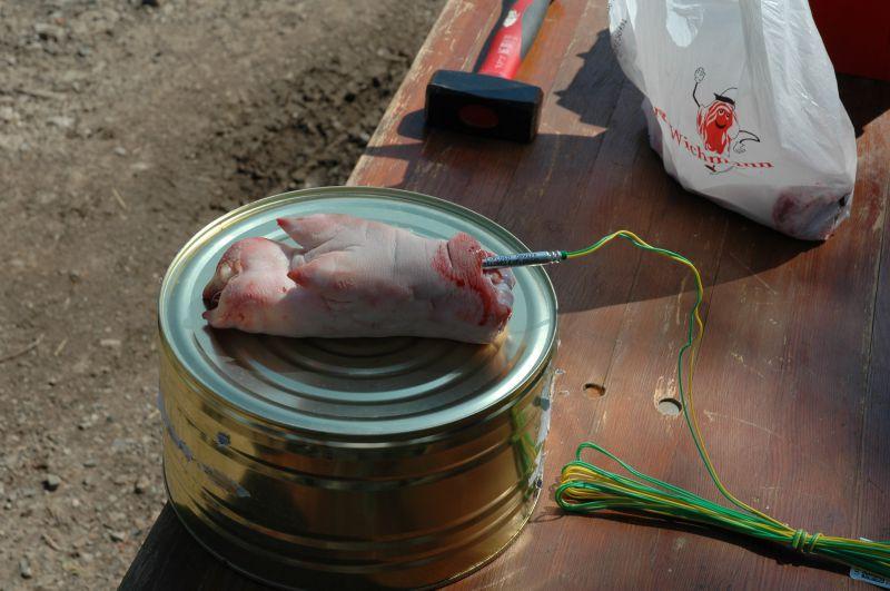 praeparieren-einer-schweinepfote