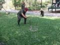 Das Mittagessen-eine Koenigskobra-wird gefangen