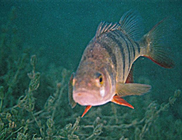 fische-tauchen-ploetzlich-auf