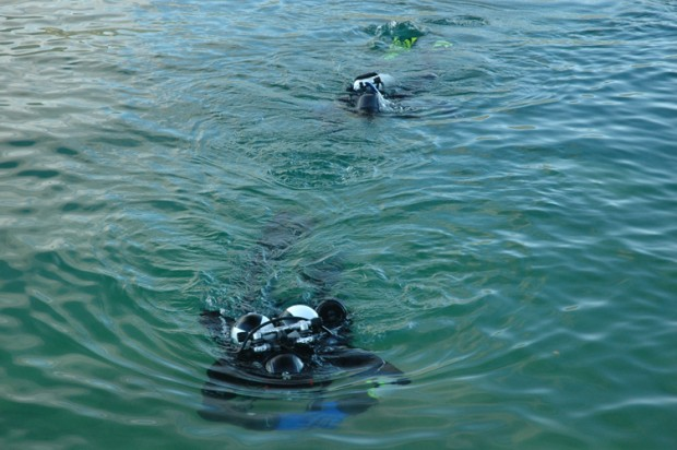 die-schueler-schwimmen-hinterher